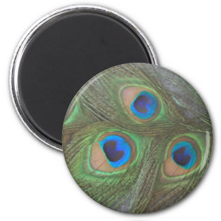 Gray Background Peacock Feathers Fridge Magnets