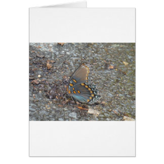 Gray Blue and orange butterfly camo Card