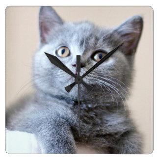 Gray British Shorthair Cat Square Wall Clock