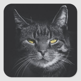 Gray cat picture on stickers