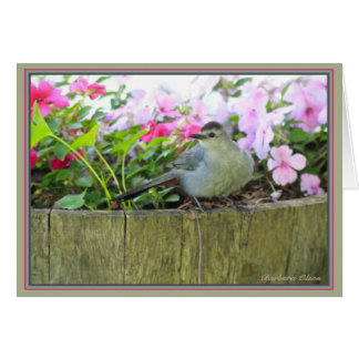 Gray Catbird Card
