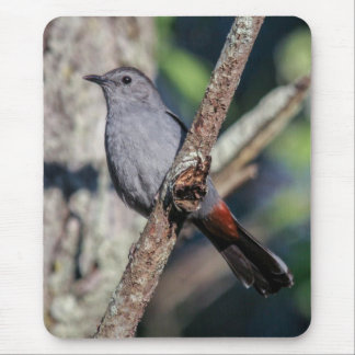 Gray Catbird Mouse Pad