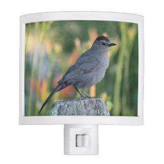 Gray Catbird Night Lights