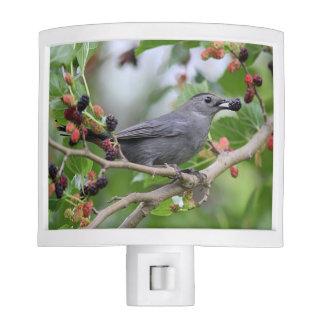 Gray Catbird Night Lites
