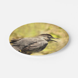 Gray Catbird Singing His Song Paper Plate