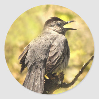 Gray Catbird Singing His Song Sticker