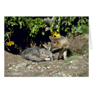 Gray Foxes-young kits at den mouth Card