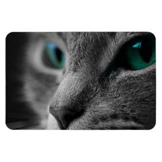 Gray Furred Cat with Striking Green Eyes Magnet