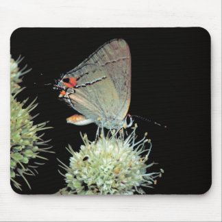 Gray Hairstreak Butterfly Mouse Pad