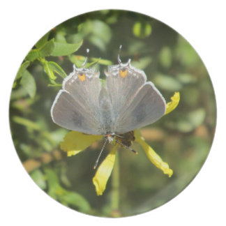 Gray Hairstreak Butterfly on Creosote Bush Plate