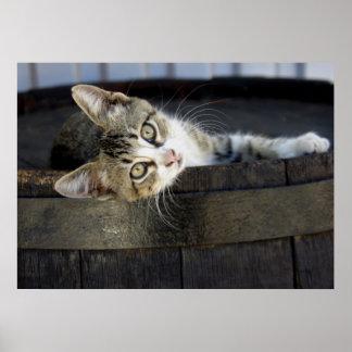 Gray Kitten Lying in a Wood Barrel Poster