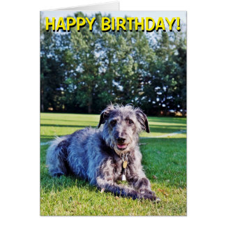 Gray lurcher customizable greetings card