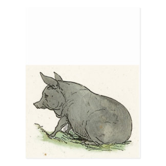 Gray Pig Piggy Children's Book Illustration Postcard