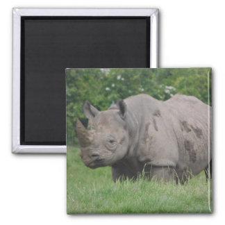 Gray Rhino Square Magnet