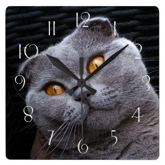 Gray scottish fold cat square wall clock