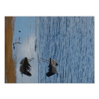Gray seabird middle poster