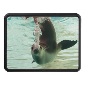 Gray Seal Diving underwater bubbles from nose Trailer Hitch Cover