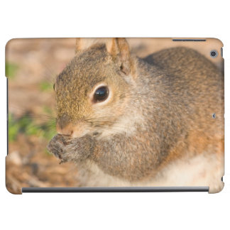 Gray Squirrel eating seeds Case For iPad Air