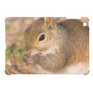 Gray Squirrel eating seeds Cover For The iPad Mini