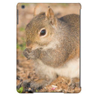 Gray Squirrel eating seeds iPad Air Case