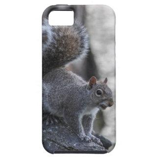 Gray Squirrel iPhone 5 Cases