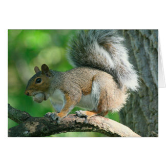 """Gray Squirrel """"Oh Nuts."""" 5x7 Greeting Card"""