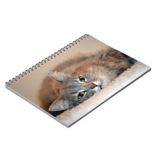 Gray, Tan, White Long-Haired Cat by Shirley Taylor Spiral Note Book