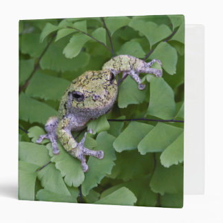 Gray tree frog on fern, Canada 3 Ring Binders