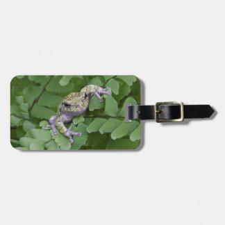 Gray tree frog on fern, Canada Bag Tag