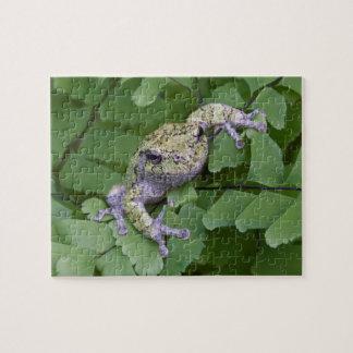 Gray tree frog on fern, Canada Jigsaw Puzzle