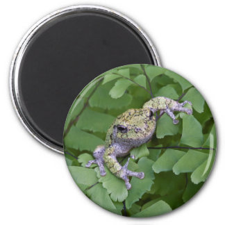 Gray tree frog on fern, Canada Magnet