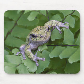 Gray tree frog on fern, Canada Mouse Pad