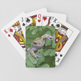 Gray tree frog on fern, Canada Playing Cards