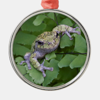 Gray tree frog on fern, Canada Silver-Colored Round Ornament