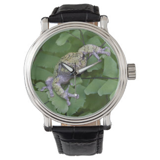 Gray tree frog on fern, Canada Wristwatches