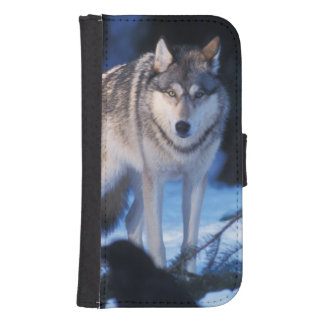 gray wolf, Canis lupus, in the foothills of the 3 Samsung S4 Wallet Case