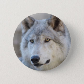 Gray Wolf Face 2 Inch Round Button