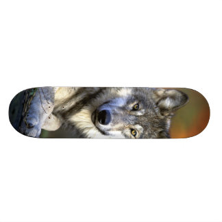 Gray Wolf - Timber Wolf - Red Wolf Series Custom Skate Board