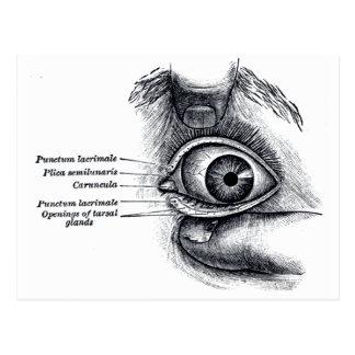 Gray's Anatomy —eyeball Postcard