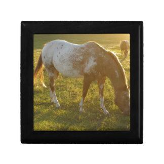 Grazing Appaloosa Horse Gift Box