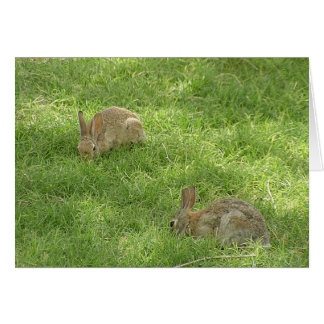 Grazing Bunnies Card