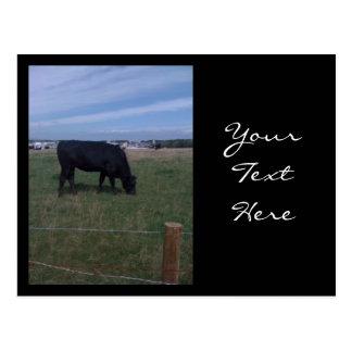 Grazing Cow Postcard