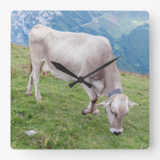 Grazing cow square wall clock