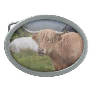 Grazing Highland Cow Belt Buckle