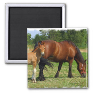 Grazing Horse Family Magnet Refrigerator Magnets