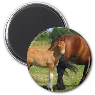 Grazing Horse Family  Magnet Refrigerator Magnet