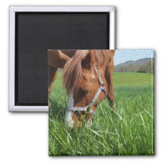 Grazing Horse Fine Art Magnet