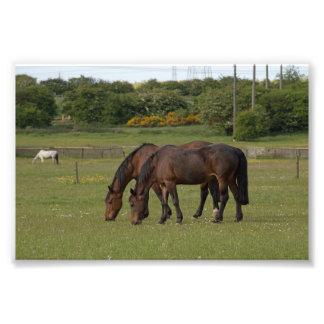Grazing Horses Photo Print