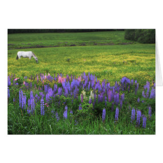Grazing In A Lupine Dream Card