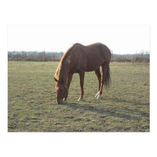 Grazing Ranch Chestnut Horses Postcard